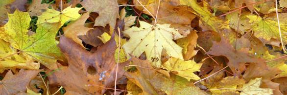 Herbstkarte im Bierthe